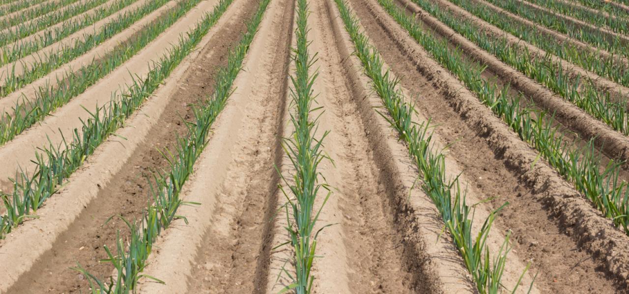 Agro vastgoed landbouwgrond te koop te wingene zwevezele for Landbouwgrond te koop